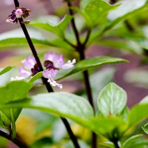 nikon - garden week three-0514