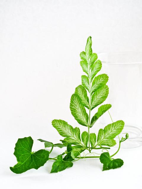 IMG_1582 Fern leaves