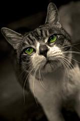 ほうせき (kyomtea) Tags: ex japan cat dc nikon sigma os 猫 f28 hsm 1750mm d7000