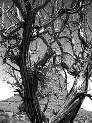 (EdFairhead) Tags: blackandwhite usa tree america monumentvalley