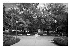 And Then There Were Five (d[^.-]b..oO(MJWong)) Tags: park blackandwhite toronto ontario canada man tree fall bench downtown sitting fuji finepix fujifilm daytime x100