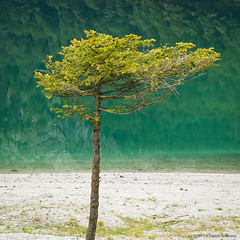 Young fir tree, Hinterer Gosausee, Austria, 2011 (Christos Andronis) Tags: lake green nature canon reflections landscape austria europe peace pastel conservation fir reflexions tranquillity gosau 5dmkii