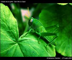 """<a href=""""http://www.flickr.com/photos/31472524@N06/6269874566/"""" mce_href=""""http://www.flickr.com/photos/31472524@N06/6269874566/"""" target=""""_blank"""">Vater_Fotografo</a> via Flickr"""