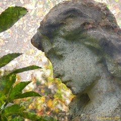 Forever dreaming - carved in stone (Lemon~art) Tags: autumn graveyard statue stone angel carved head dreaming forever textured 2011