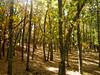 otoño #3 (juanpablo.santosrodriguez) Tags: autumn trees wallpaper tree verde green yellow hojas arbol arboles amarillo otoño leafs fondodeescritorio