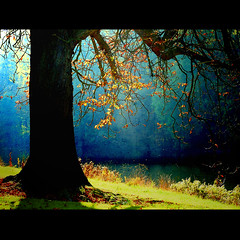 leaves against blue ( Peter Grahlmann ) Tags: light tree art texture nature colors leaves butterfly river germany dark golden colours shadows natureza poetic rays idream saariysqualitypictures ringexcellence bewiahn
