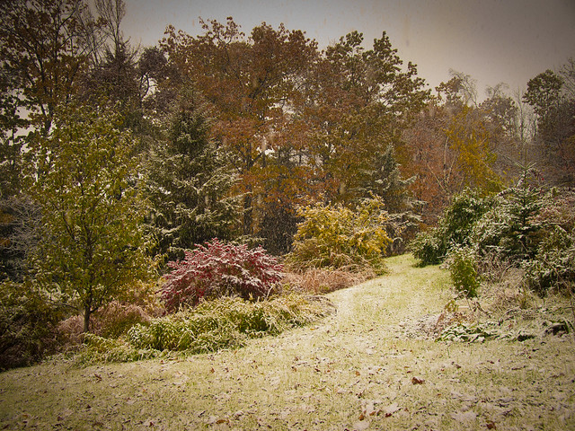 FirstSeasonsSnow_20111027_4271