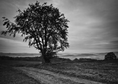 Misty morning / Maana neblinosa (Alfonso Salgueiro | Photography) Tags: bw mist tree landscape bn luxembourg niebla kaundorf canon7d tokina1116 hautesre uppersre luxembourgardennes
