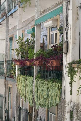 lisbon - succulents