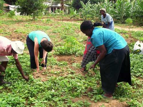 working in the shamba.
