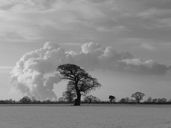 Drax (seanofselby) Tags: snow tree north drax duffield