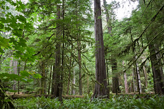 Cathedral Grove (transfear) Tags: ocean park cloud castle beer museum vancouver de point boat washington fisherman ray cathedral juan pacific god grove britishcolumbia jacob snail wave scuba di