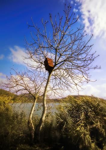 Noi alberi che viviamo di pioggia, di sole e di eterne rugiade...