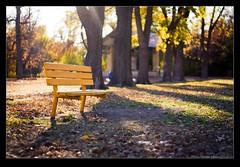 Yellow Bench (Erika Victor) Tags: park autumn trees nature leaves bokeh kansas hays 50mmf18 canonrebelxs benchfall