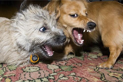 mendoza_dogs_06_10_03_4