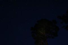 Light Painting (Zoom Lens) Tags: trees lightpainting tree pine night forest dark stars star darkness pines flashlight nightsky starlight starlightstarbright johnrussellakazoomlens copyrightbyjohnrussellallrightsreserved