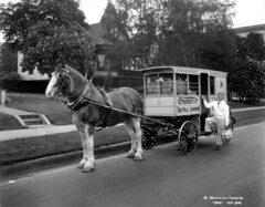 Associated Dairies truck [delivery man with horse and wagon]