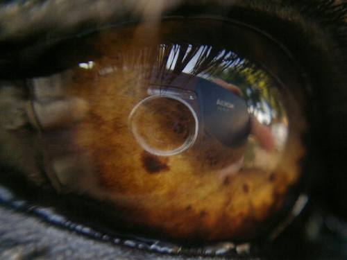 Nokia N8 reflex on my German Sheperd's eye - Macro Lens