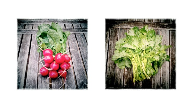 radishes and broccolini