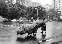 Mumbai, September 1999 (Riverman___) Tags: street travel blackandwhite india blancoynegro film rain 50mm md minolta 28mm 400 bombay hp5 cart sack mumbai load ilford fp4 cartwheel 125 x700 f17 rokkor