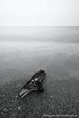 old tree branch at the sea coast (nickolay_khoroshkov) Tags: ocean old sea sky white seascape black tree beach nature monochrome vintage landscape bay coast long exposure branch calm retro coastal coastline hoizon