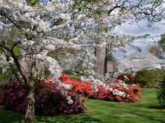 Hampton Park, Spring View (Melinda * Young) Tags: park color green sc spring camden lawn carolina azalea cherrytrees historicdistrict hamptonpark nrhp