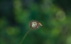JRLD-20110617_12746 (XoseMon) Tags: insectos spain zaragoza animales aragón chinche aragn