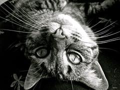 my best friend (kendalljamison) Tags: lighting light blackandwhite cats macro animals kittens mygearandme