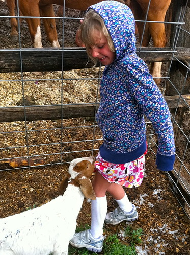Baby goat Jo noshing on CJ's skirt