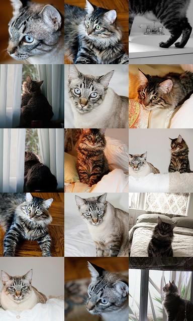The Cats Mosiac