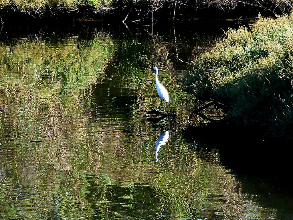 04-10-2011-egret-reflection