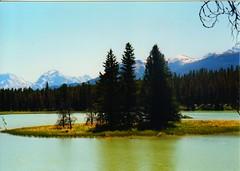 an island of trees (wolf8_us) Tags: canada travels jasper rivers