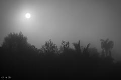 sunrise (stalin.sm) Tags: mist kerala wayanad mistymorning vythri padinjarathara