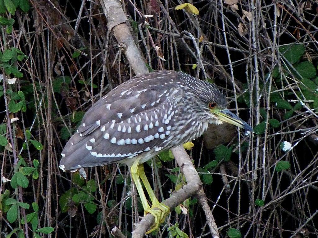 13-10-2011-heron-baby