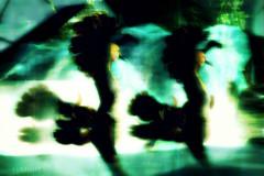 Avian Duo (Luminis Kanto) Tags: life motion bird dancing body avatar joy sl secondlife avian npirl metabody