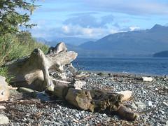 Sointula beach, Malcolm Island, B.C. (indigo_at_heart) Tags: ocean wood canada mountains bc britishcolumbia vancouverisland driftwood pacificocean finnish westcoast sointula malcolmisland