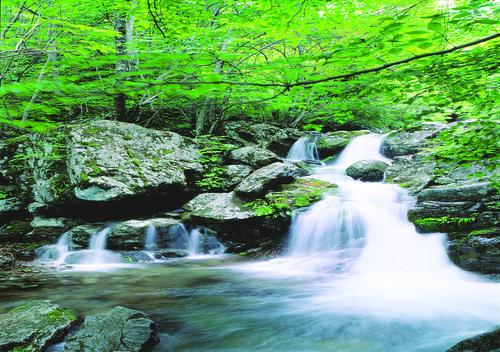 無料写真素材, 自然風景, 河川・湖, 森林, 滝, 緑色・グリーン