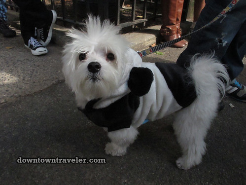 Tompkins Park Halloween Dog Parade_Maltese mix in Panda costume