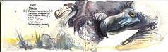 dodo (Jennifer Kraska) Tags: bird art moleskine watercolor jennifer dodo kraska jenniferkraska