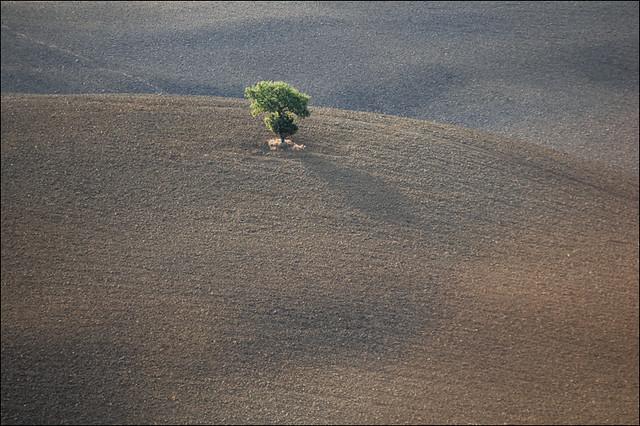http://farm7.static.flickr.com/6034/6274056452_f997414c7d_z.jpg