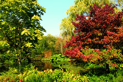 Changing Seasons, Rosemoor Gardens, Great Torrington (Vicky...Lewis (www.vixgallery.com)) Tags: uk autumn trees plants lake southwest water reflections garden pond devon torrington rhs westcountry colouful rosemoor northdevon greattorrington rhsrosemoorgardens