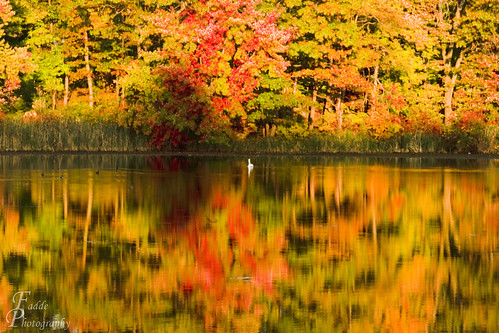 Reflective Fall Colors