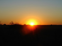 I will try again tomorrow (Texas to Mexico) Tags: ranch sunset orange sun tree rural gold texas silhouettes mesquite setting southtexas fenceposts sizzle lonestarstate endoftheday anotherday uvaldecounty tryagainanotherday