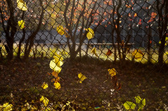 L'Autunno (Adagio Molto) (pni) Tags: light red tree green grass yellow metal fence suomi finland leaf helsinki quiet helsingfors visualmusic skrubu pni manandenvironment pekkanikrus