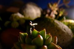 Asuntos Espinosos 057 (quijano M) Tags: cactus toy toys miniaturas preiser crasas plantascrasas asuntosespinosos