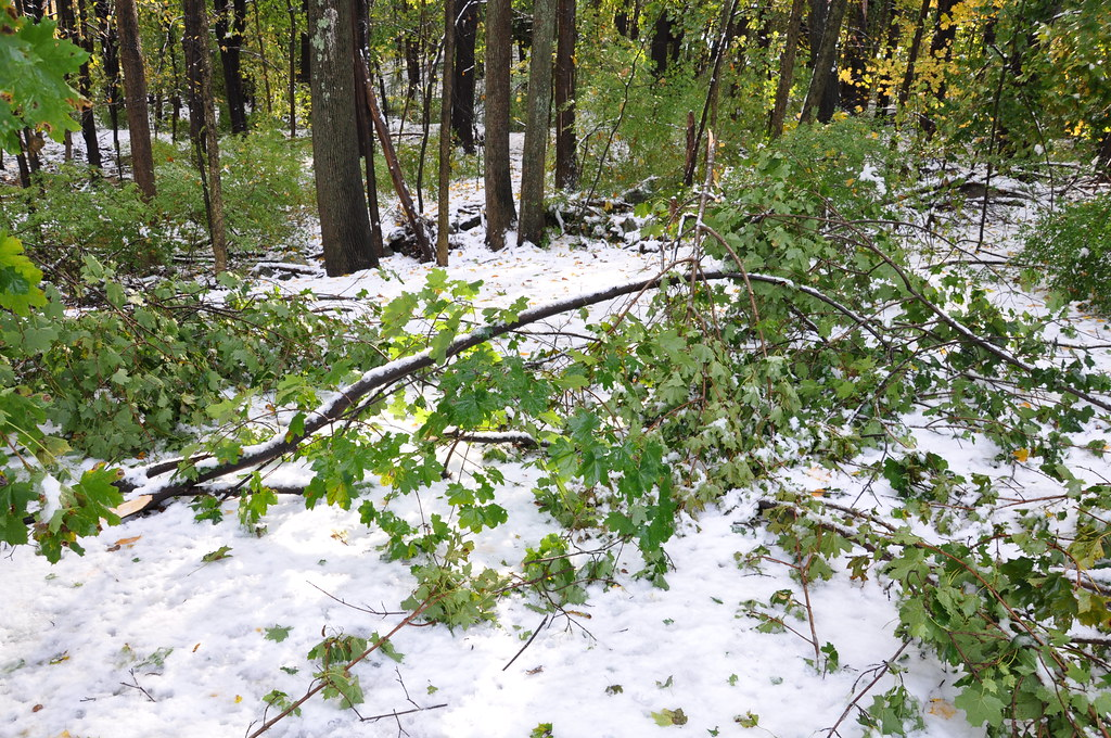2011-10-30 - Branches Down from Last Night's Snow Storm 009