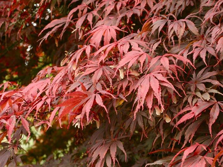 ubc botanical garden 006