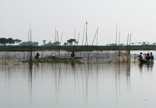 Fishing in haor, Sunamganj, Bangladesh. Photo by Balaram Mahalder, 2008