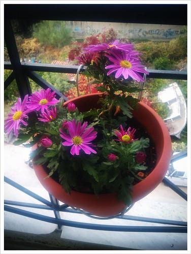 Ανθισμένο λουλούδι - αντίσταση στην κρίση