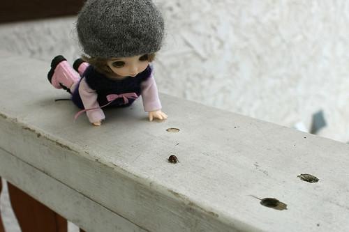 Ladybug!!